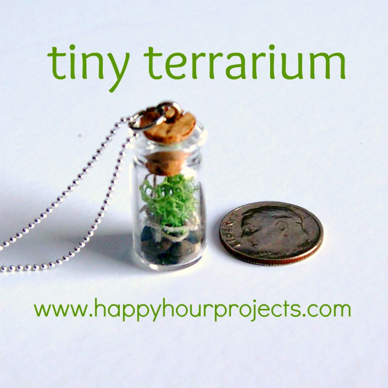 Tiny Terrariums for Earth Day