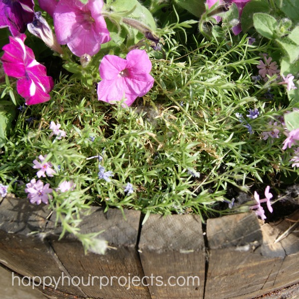 Whiskey Barrel Planter at happyhourprojects.com