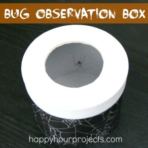Bug Observation Box at www.happyhourprojects.com