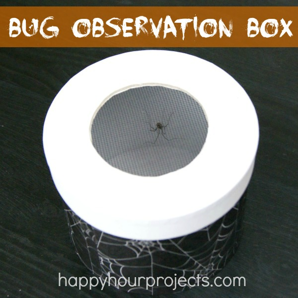 Not So Scary: Kids' Bug Observation Box