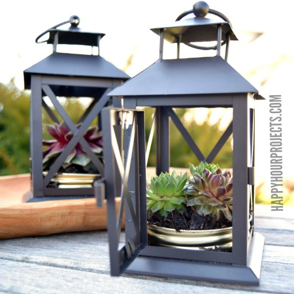 Repurposed Lantern Mini-Gardens with Succulents at www.happyhourprojects.com