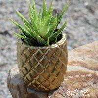 http://www.doodlecraftblog.com/2017/03/pineapple-succulent-planter.html#